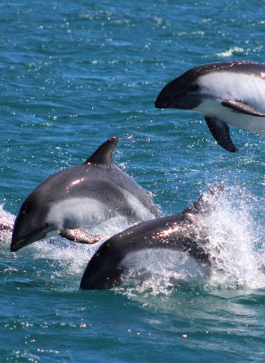 ruta delfin austral