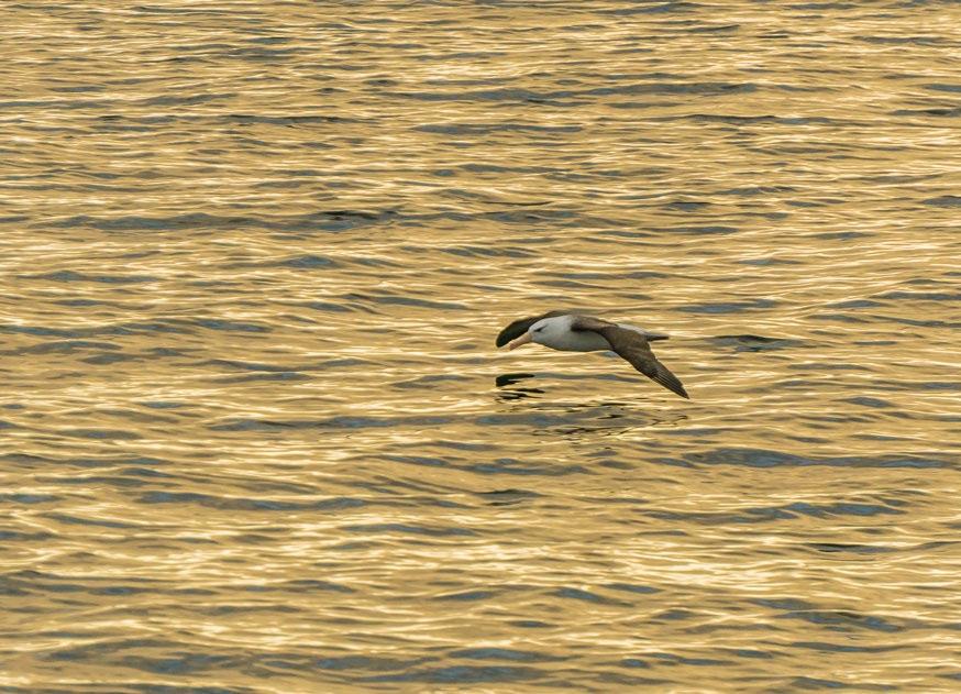 imagen albatros