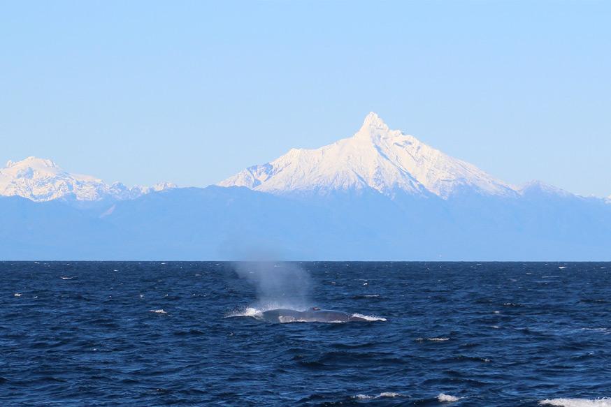 ruta ballenas 2