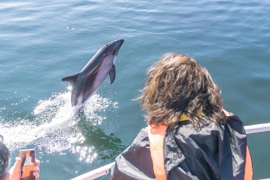 delfines chiloe