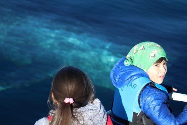 turistas y ballenas chiloe